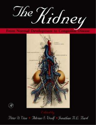 The Kidney