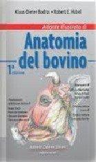 Atlante illustrato di anatomia del bovino