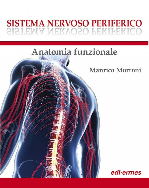 Sistema nervoso periferico. Anatomia funzionale